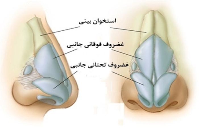 ساختار بینی